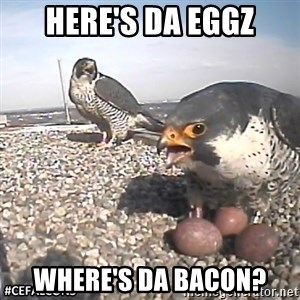 #CEFalcons - Here's Da EGGZ Where's Da bacon?