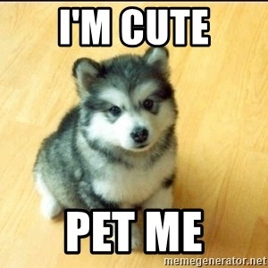 Baby Courage Wolf - I'm cute Pet Me