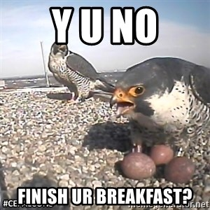 #CEFalcons - Y u no Finish ur breakfast?