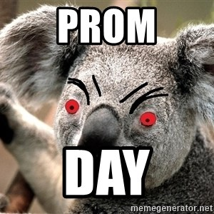 Abortion Koala - prom day