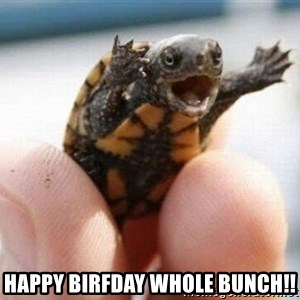 angry turtle -  HAPPY BIRFDAY WHOLE BUNCH!!