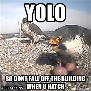 #CEFalcons - YOLO So dont fall off the building when u hatch