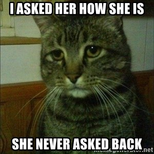Depressed cat 2 - i asked her how she is she never asked back