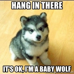 Baby Courage Wolf - hang in there It's ok, I'm a baby wolf