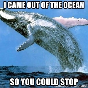 whaleeee - I came out of the ocean so you could stop
