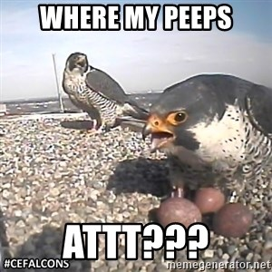#CEFalcons - WHERE MY PEEPS ATTT???