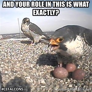 #CEFalcons - And your role in this is what exactly?