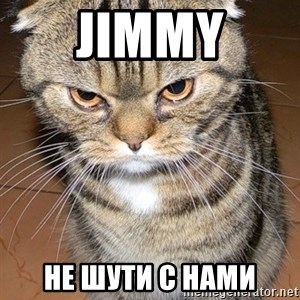 angry cat 2 - jimmy не шути с нами
