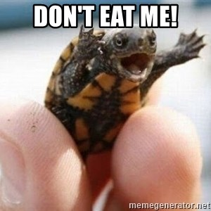 angry turtle - Don't eat me!