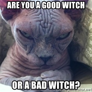 Plotting Evil Cat - Are you a Good Witch Or a Bad Witch?