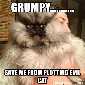 Colonel Meow - Grumpy........... Save me from Plotting Evil cat