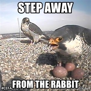 #CEFalcons - STEP AWAY  FROM THE RABBIT