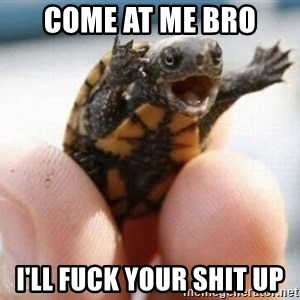 angry turtle - Come at me bro I'll fuck your shit up
