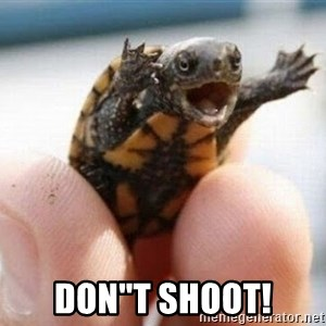 "angry turtle -  Don""t SHOOT!"