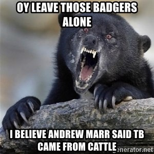 Insane Confession Bear - oy leave those badgers alone i believe andrew marr said tB came from cattle