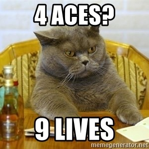 Poker Cat - 4 aces? 9 lives