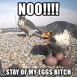#CEFalcons - NOO!!!! STAY OF MY EGGS BITCH