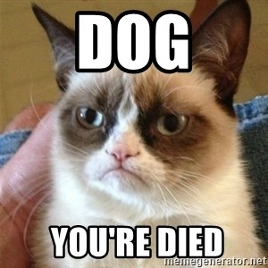 Grumpy Cat  - Dog  you're died