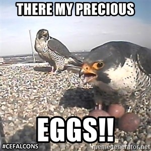 #CEFalcons - THERE MY PRECIOUS  EGGS!!
