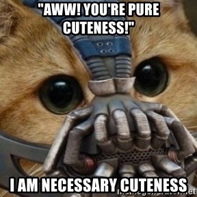 "bane cat - ""AWW! YOU'RE pure CUTEness!"" I am necessary cuteness"