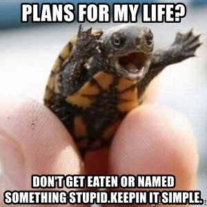angry turtle - Plans for my life? Don't get eaten or named something stupid.KeePin it simple.