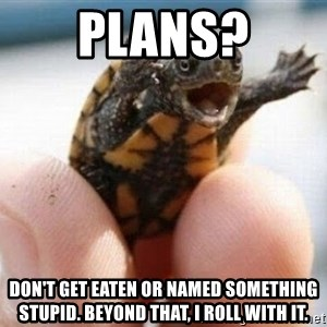 angry turtle - Plans? Don't get eaten or named something stupid. Beyond that, I roll with it.