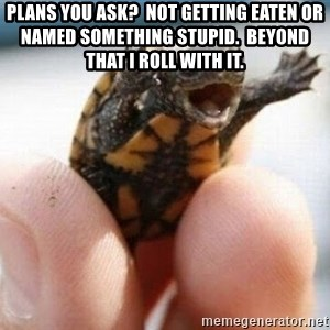 angry turtle - Plans you ask?  Not getting eaten or named something stupid.  Beyond that I roll with it.