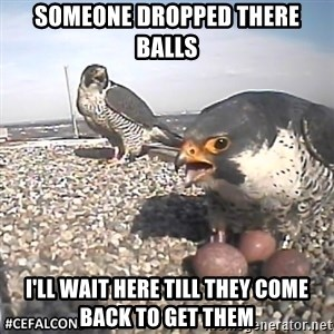 #CEFalcons - SOMEONE DROPPED THERE BALLS  I'LL WAIT HERE TILL THEY COME BACK TO GET THEM