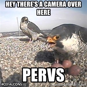 #CEFalcons - hey there's a camera over here pervs
