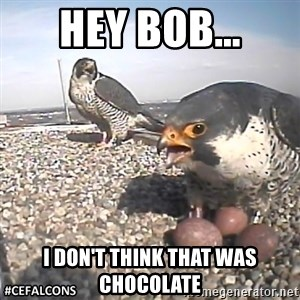 #CEFalcons - HEY BOB... I DON'T THINK THAT WAS CHOCOLATE