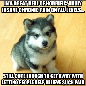 Baby Courage Wolf - In a great deal of horrific, truly insane chronic pain on all levels... still cute enough to get away with letting people help relieve such pain