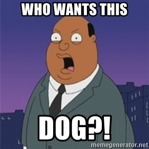 ollie williams - WHO WANTS THIS DOG?!