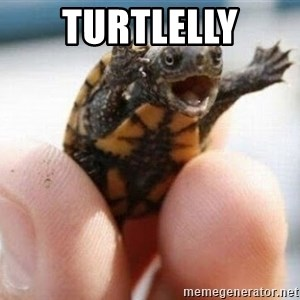 angry turtle - TURTLELLY