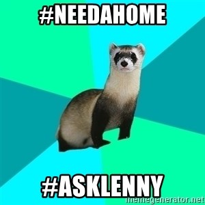 Obvious Question Ferret - #needahome #asklenny