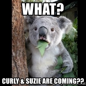 Koala can't believe it - what? curly & suzie are coming??