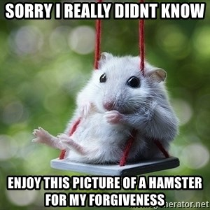 Sorry I'm not Sorry - sorry i really didnt know enjoy this picture of a hamster for my forgiveness