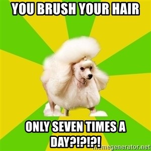 Pretentious Theatre Kid Poodle - You brush your hair  Only SEVEN times a day?!?!?!