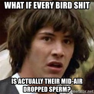 what if meme - What if every bird shit is actually their mid-air dropped sperm?