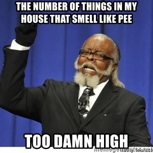Too high - The number of things in my house that smell like pee too damn high