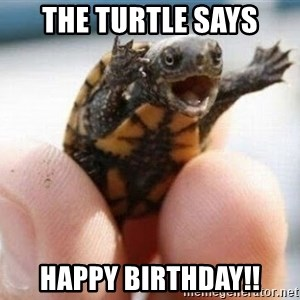 angry turtle - The Turtle Says Happy Birthday!!