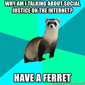Obvious Question Ferret - why am i talking about social justice on the internet?  have a ferret