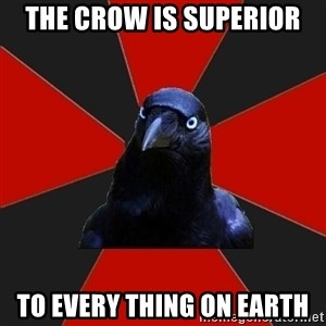 Gothiccrow - THE CROW IS SUPERIOR TO EVERY THING ON EARTH
