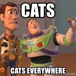 buzz light - Cats Cats everywhere