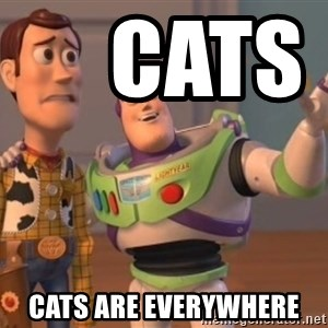 buzz light -      CATS                 CATS ARE everywhere