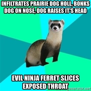 Obvious Question Ferret - Infiltrates Prairie Dog Holl, Bonks Dog on Nose, Dog Raises It's Head Evil Ninja Ferret Slices Exposed Throat