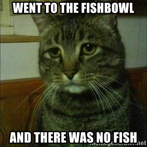 Depressed cat 2 - Went to the fishbowl And there was no fish