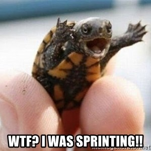 angry turtle -  WTF? I was sprinting!!