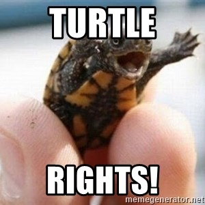 angry turtle - Turtle Rights!