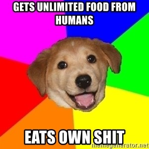 Advice Dog - gets unlimited food from humans eats own shit