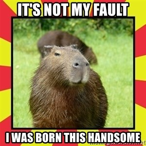 Handsome Capivara  - It's not my fault I was born this handsome
